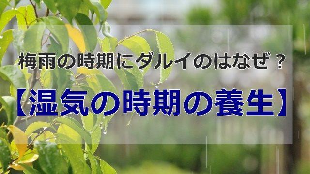 悪天候の庭