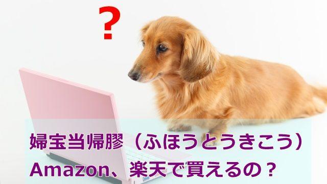 インターネットで婦宝当帰膠を探す犬