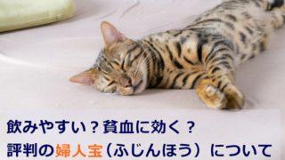 妊活疲れの猫ちゃん