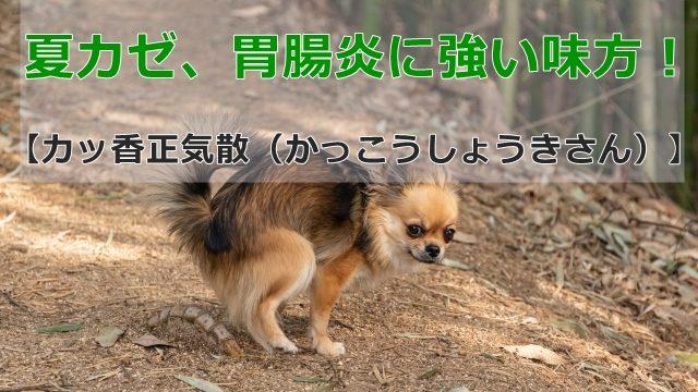 つらい下痢の犬